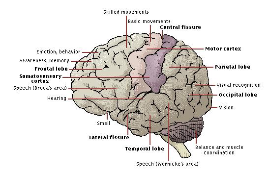 motor-functions